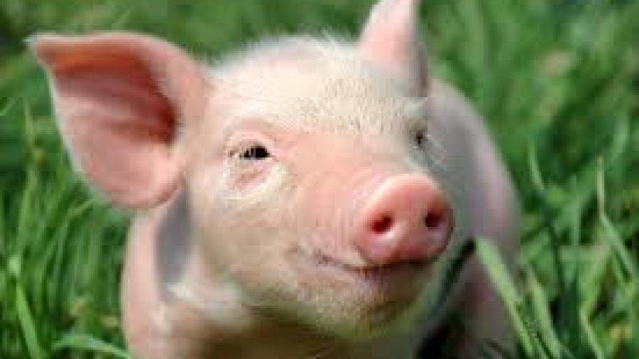 pig pork