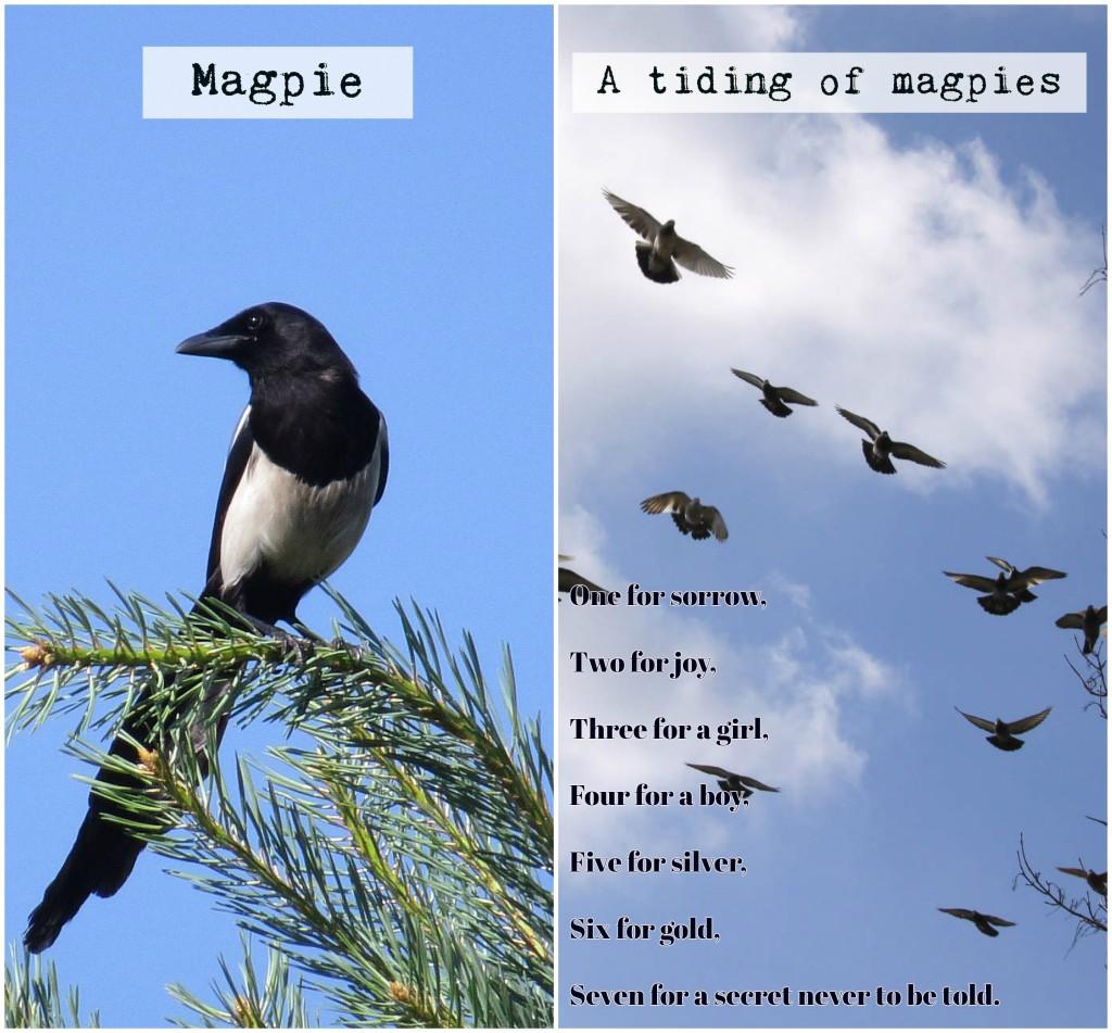 nombres grupos animales inglés